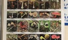 昆明女子吃野生菌中毒自称看到精灵,医院日收约25个中毒者