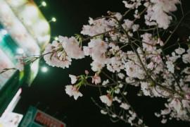 【日本游记】夜半时分的温泉和关东煮真是治愈啊