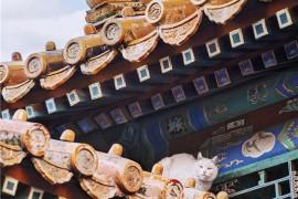 """实地寻访故宫里的""""御猫"""",镜头下的惬意生活之外,却是和流浪猫一样的生存现实"""
