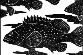 石斑鱼的选择:湖鱼安逸、河鱼灵巧、江鱼矫健,石斑鱼,选择做坚忍的海鱼