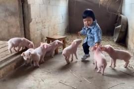"""是谁家的猪在拱可爱的""""小白菜""""!网友:被财富所围绕的白菜公主"""