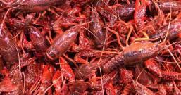 虾头不能吃?虾皮补钙?关于虾的那些事儿你被误导过吗