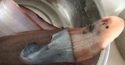 炸大踏板鱼的做法步骤