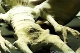 墨西哥发现外星人弃婴,美国收集30多具外星人遗骸,外星人成为美国人