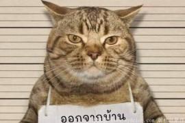 """泰国虎斑猫违反宵禁遭""""逮捕""""一脸无辜萌翻网友"""