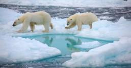 重生? 「冰河时代微生物」恐引发下一次大流行