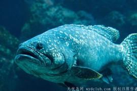 钓到264公斤巨型石斑鱼 16岁少女破世界纪录