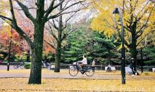 黄色秋光 | 东京3个银杏景点实测(光之丘、国营昭和纪念公园、神宫外苑)