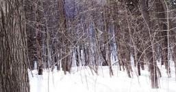遊记 《旅记:世界裂痕处等你》:雪中琉璃