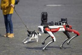 公司怎么都开始「造狗」了?