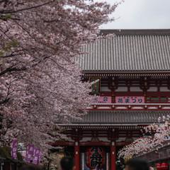 东京上野浅草区域 | 1天时间游玩6大特色超棒景点 旅游资讯 第11张