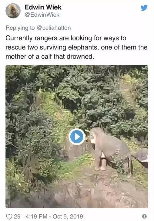 悲伤!泰国一小象跌落瀑布,5大象为救其性命均丧生 网文选读 第4张