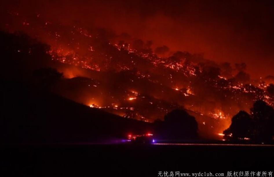 澳洲火灾后森林长出了嫩芽!全澳一张照片刷屏了 网文选读 第2张