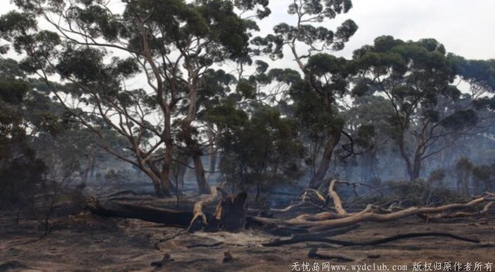 澳洲火灾后森林长出了嫩芽!全澳一张照片刷屏了 网文选读 第5张