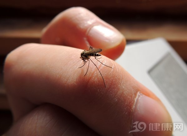 蚊子最喜欢这7类人,很多人都中招!4个小措施可轻松防蚊 健康养生 第1张