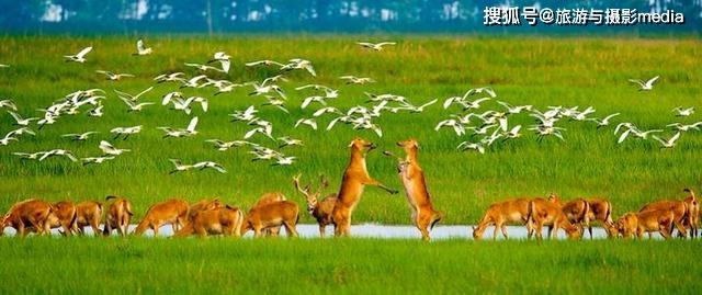 世界最大的野生麋鹿种群,总面积 78000公顷,国内外游客近100万人次 旅游资讯 第1张