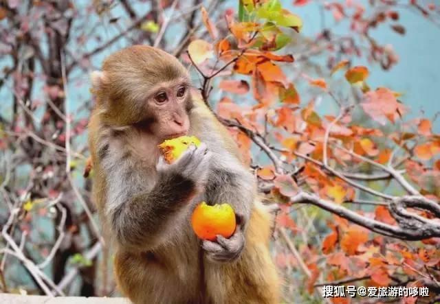 三峡之秋,完全不输日本的红叶季,手把手教你吊打票圈! 旅游资讯 第11张