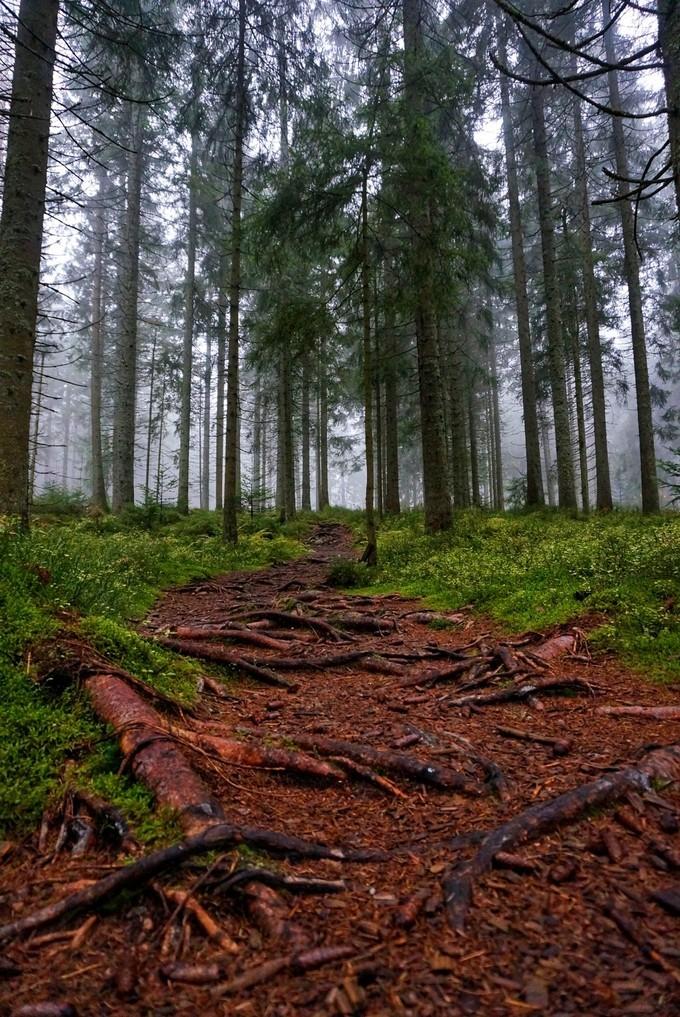 自驾德国黑森林之路,浪漫之路世遗打卡游 旅游资讯 第7张
