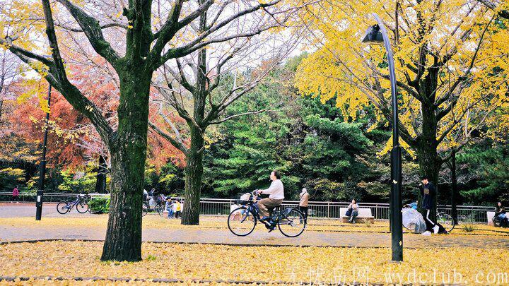 黄色秋光 | 东京3个银杏景点实测(光之丘、国营昭和纪念公园、神宫外苑) 旅游资讯 第1张