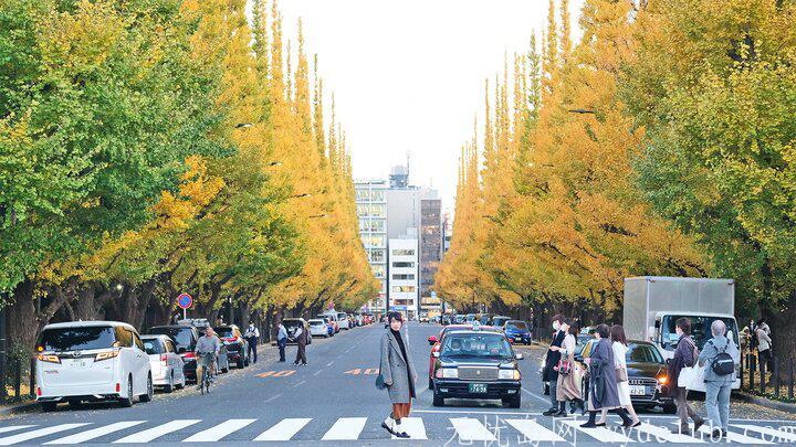 黄色秋光 | 东京3个银杏景点实测(光之丘、国营昭和纪念公园、神宫外苑) 旅游资讯 第2张