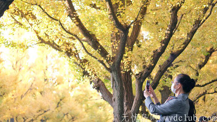 黄色秋光 | 东京3个银杏景点实测(光之丘、国营昭和纪念公园、神宫外苑) 旅游资讯 第4张