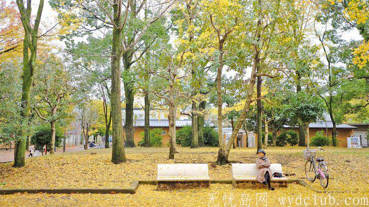 黄色秋光 | 东京3个银杏景点实测(光之丘、国营昭和纪念公园、神宫外苑) 旅游资讯 第5张