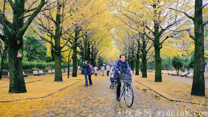 黄色秋光 | 东京3个银杏景点实测(光之丘、国营昭和纪念公园、神宫外苑) 旅游资讯 第6张