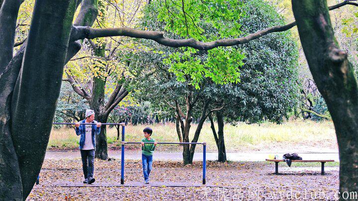 黄色秋光 | 东京3个银杏景点实测(光之丘、国营昭和纪念公园、神宫外苑) 旅游资讯 第7张