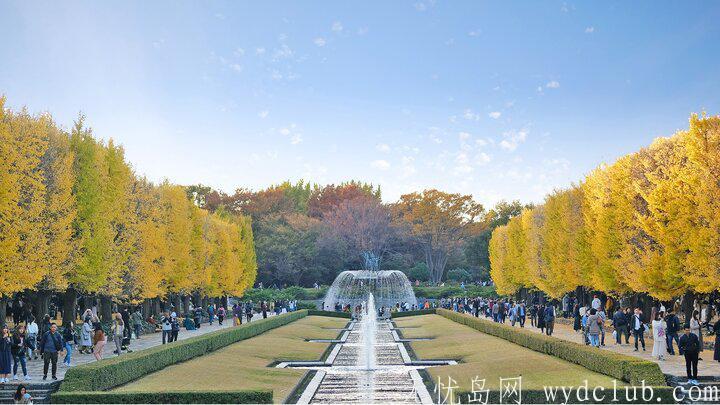 黄色秋光 | 东京3个银杏景点实测(光之丘、国营昭和纪念公园、神宫外苑) 旅游资讯 第8张