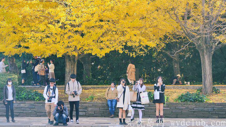 黄色秋光 | 东京3个银杏景点实测(光之丘、国营昭和纪念公园、神宫外苑) 旅游资讯 第9张