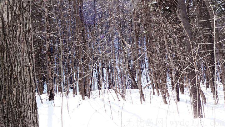 遊记 《旅记:世界裂痕处等你》:雪中琉璃 旅游资讯 第1张