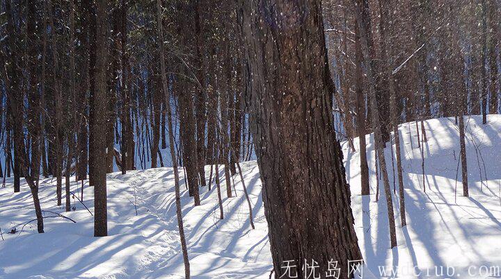 遊记 《旅记:世界裂痕处等你》:雪中琉璃 旅游资讯 第4张