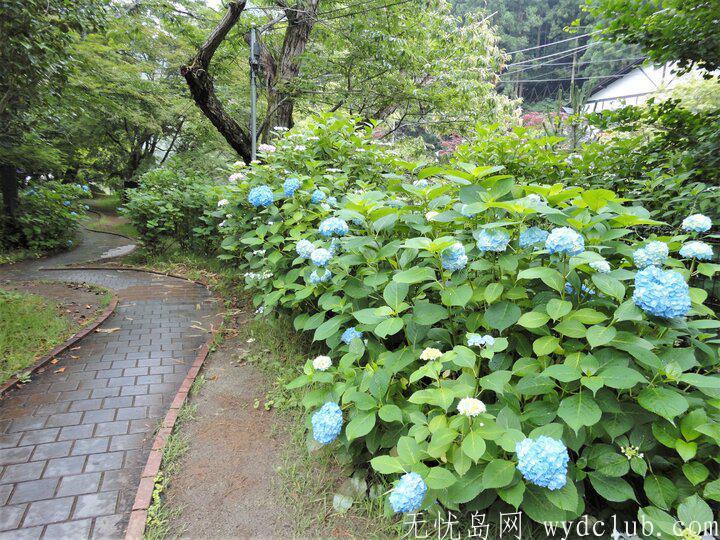 日本三大瀑布--袋田瀑布,华巖瀑布,那智瀑布 旅游资讯 第2张