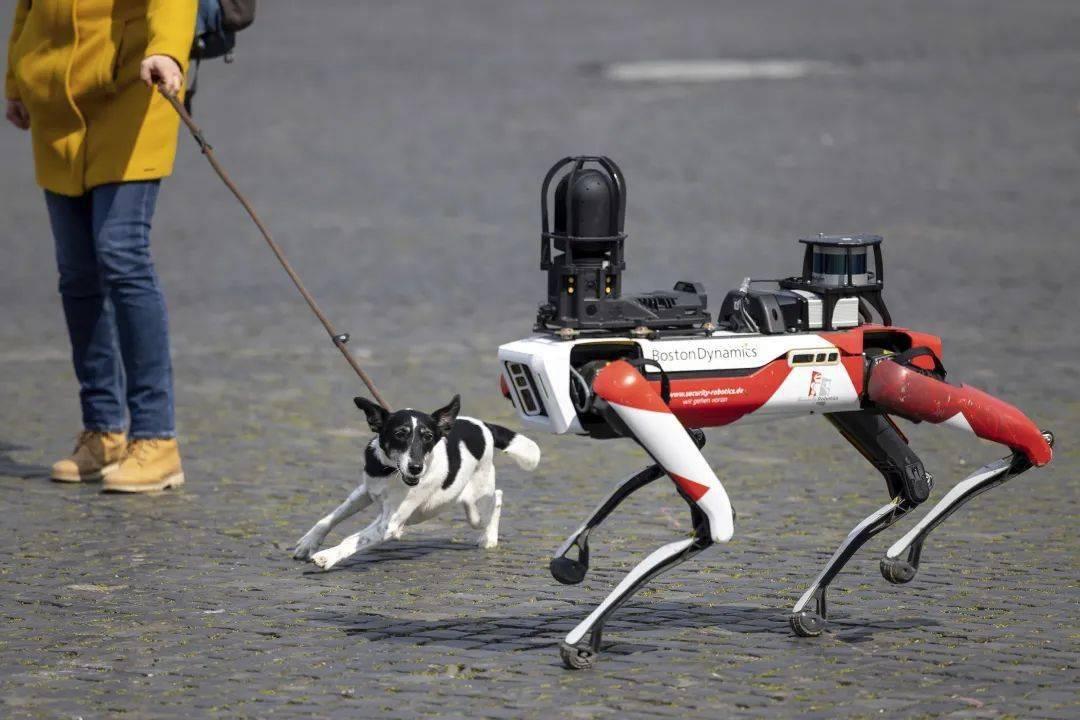公司怎么都开始「造狗」了?  消费与科技 第1张